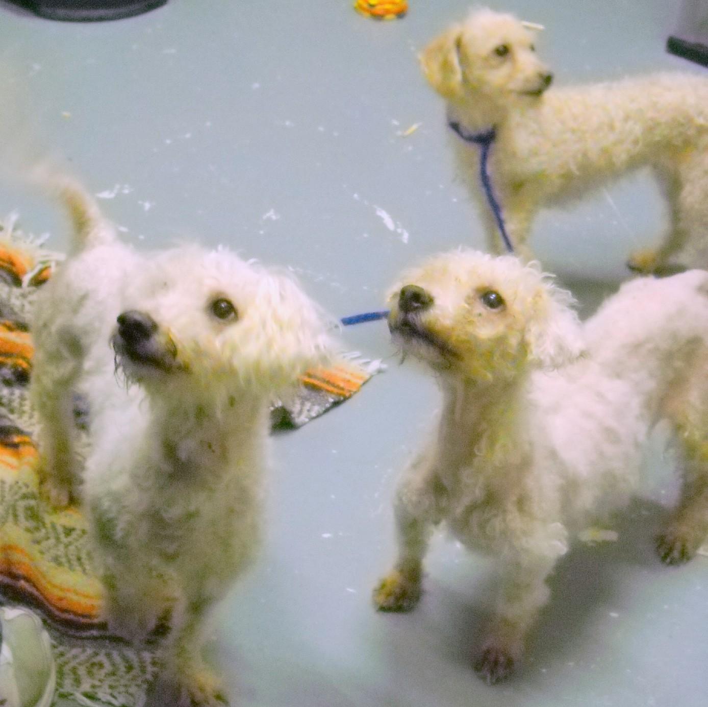 Pets Pets Pets Amityville Record